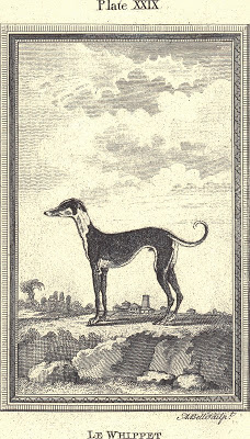 Le Whippet