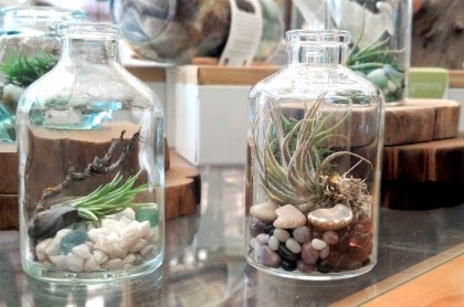 mini terrariums