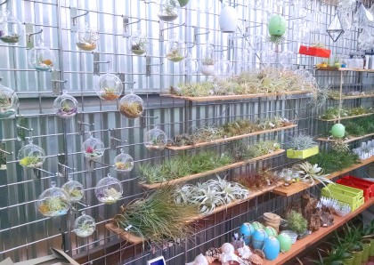 Airplant Wall